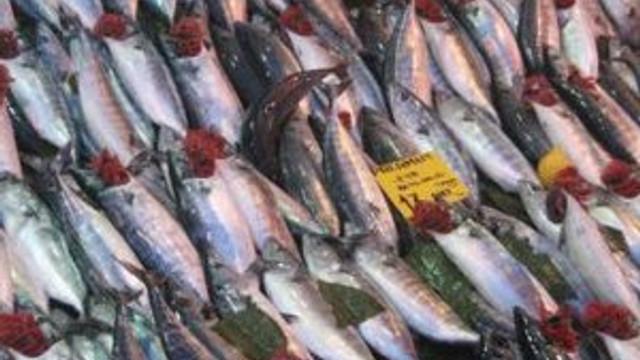 Palamut avı son 11 yılın en verimli dönemi !