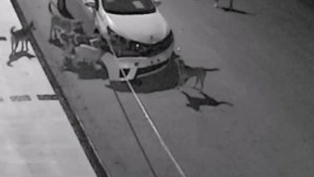 ''Sokak köpekleri otomobili intikam için parçaladı''