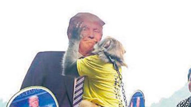 Kahin maymun ABD'deki seçimleri de bildi !