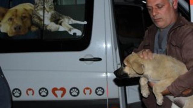 Ölüme terk edilen köpeklere yine Büyükşehir Belediyesi sahip çıktı