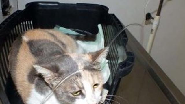 Tecavüz edilen kedi öldü