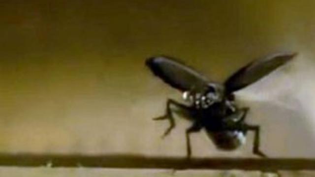 TSK'ya böcek İHA'lar geliyor !