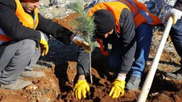1 milyon metre kare alanda ağaçlar yeşerecek