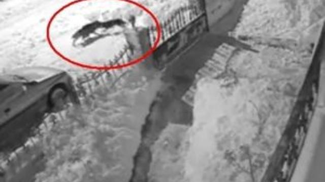 Aç kalan kurt köpeğe böyle saldırdı