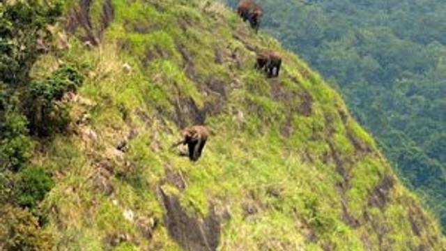 Filler dağa çıktı !