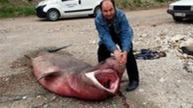 Antalya'da dev köpek balığı