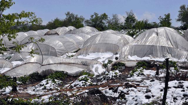 Kar yağışı üreticiyi perişan etti !