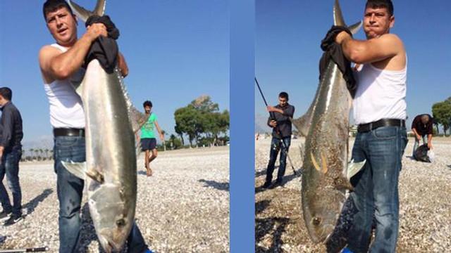 Yakaladıkları 30 kiloluk balığı bakın ne yaptılar