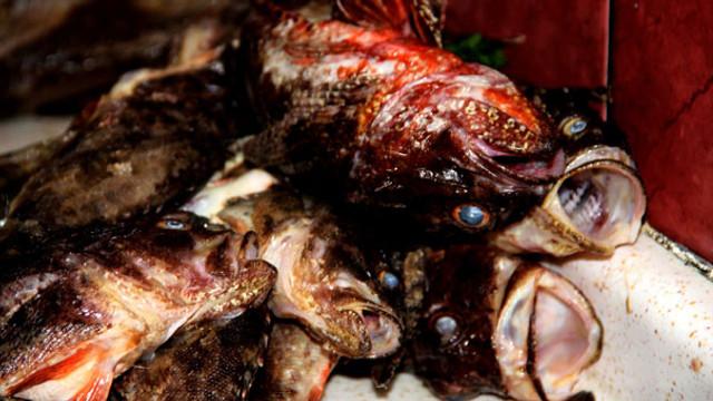 Balıkçıların vazgeçilmezi: İskorpit balığı