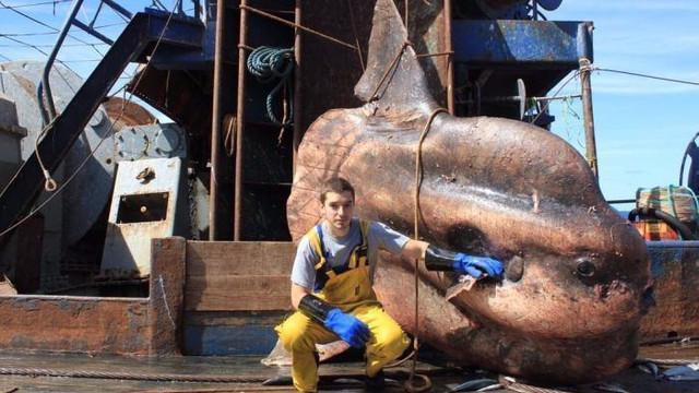 İnanılmaz ama bu korkunç balıklar denizden çıktı