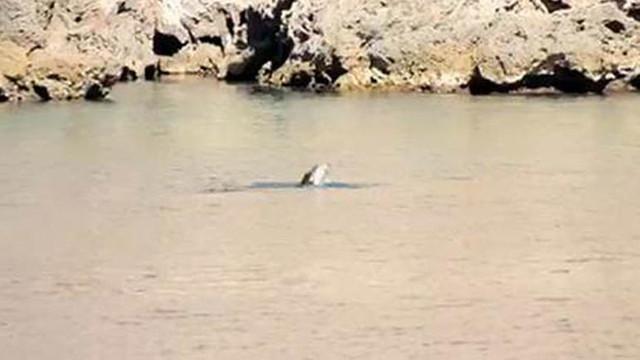 Antalya sahillerinde korkutan görüntü: Besleniyorlar !