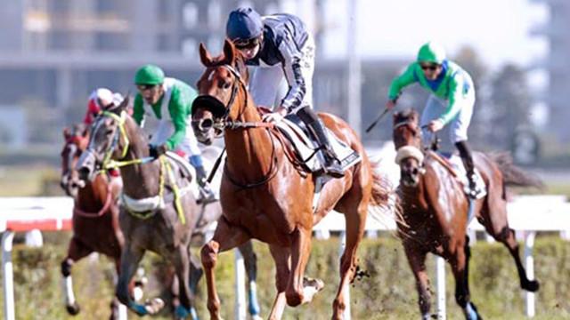 Charlie Austin'in atı 115 milyon Euro kazandırdı !