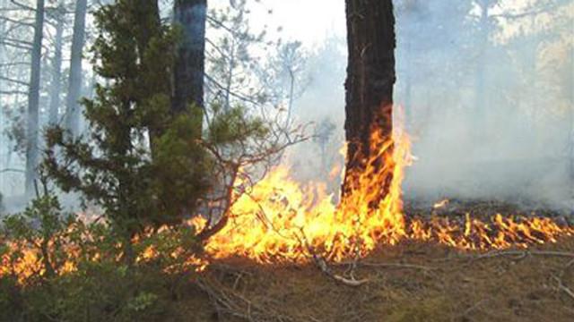 Söndürülmemiş izmaritler binlerce yangına neden oldu