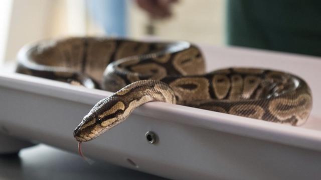 3 metrelik yılan cinsel organını ısırdı !