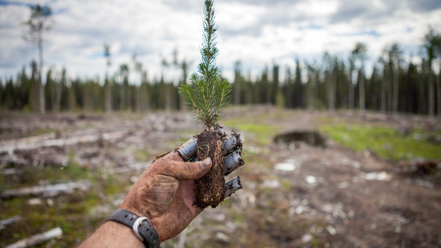 Yatırımcının yeni gözdesi: ''Ağaç dik, zengin ol''