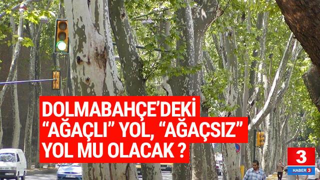 Dolmabahçe'nin ağaçları hedefte !