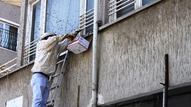 Arılar kent merkezini istila etti !