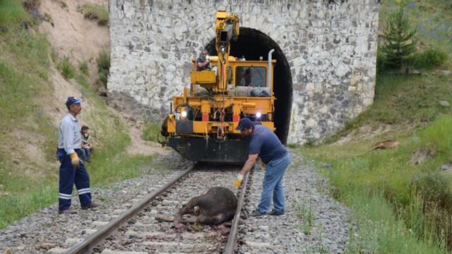 Tren sürüye daldı, 20 büyükbaş telef oldu