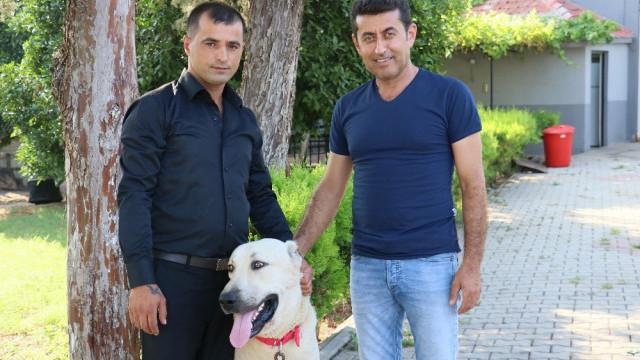 Antalya tatili ödüllü kangal bulundu
