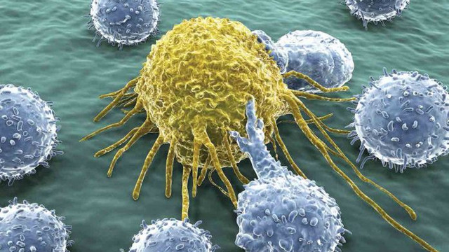 Bu gen kanser hücresi saptadığı an kanser hücresini öldürüyor