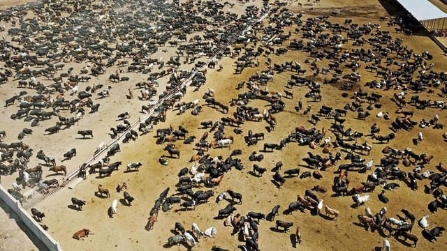 Bakan Pakdemirli'den ''şarbonlu hayvan'' açıklaması