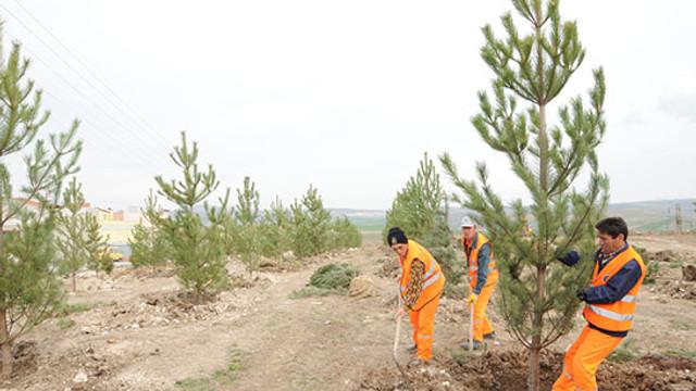 İşte Türkiye gerçeği ! Milyonlarca ağaç dikildi ama ormanlar kurtulmadı