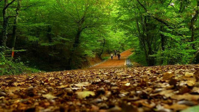 İstanbullulara müjde ! Belgrad Ormanı kurtuldu !