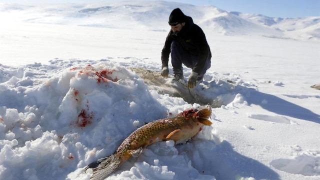 Eskimo usulü yapıyor ! En büyüğünü yakaladı