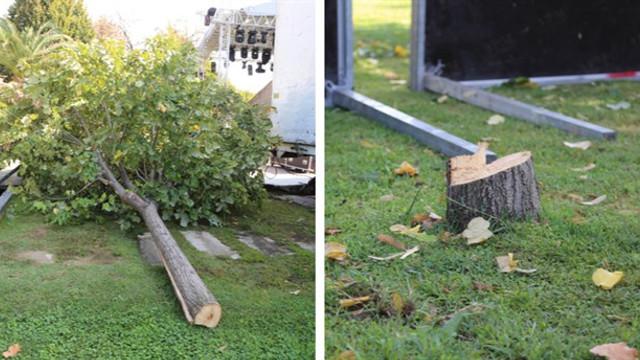 Teoman konseri için ağaç katliamı