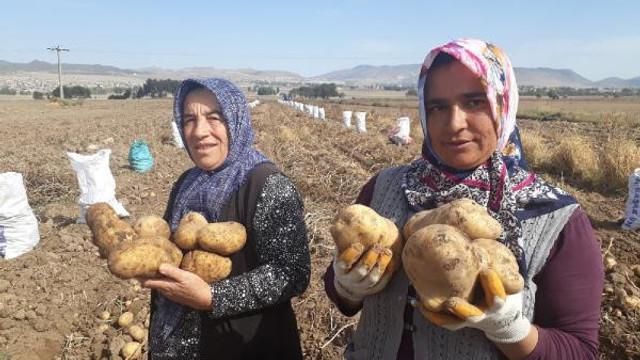 Yerli ve milli patates çiftinin yüzünü güldürdü