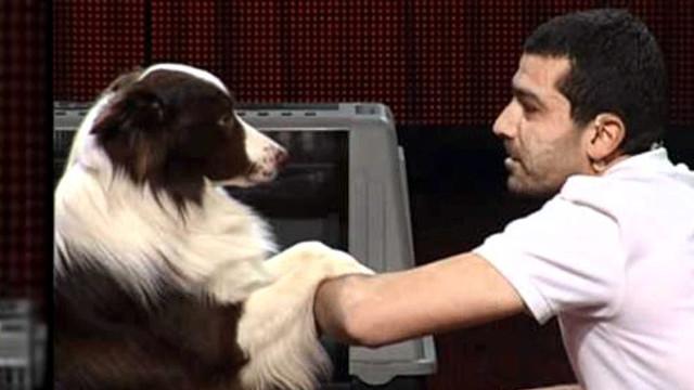 Yetenek Sizsiniz'in şampiyon köpeği öldü