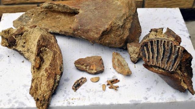 372 milyon yıllık fosil bulundu