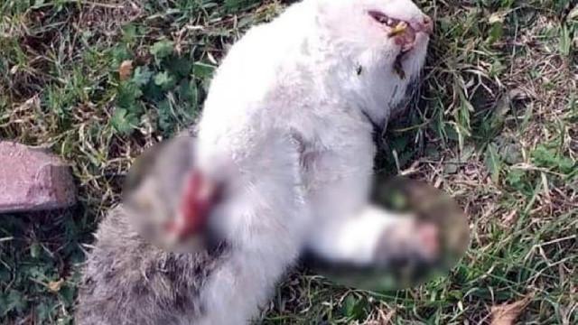 Kedilerin ayaklarının kesilerek öldürüldüğü iddiası !