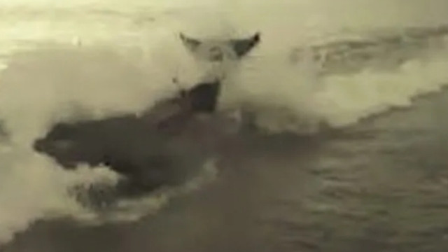 Antalya'da dev bir balina sahile vurdu