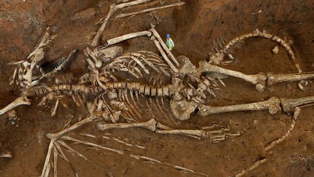 Rusya'da ejderha kalıntıları bulundu