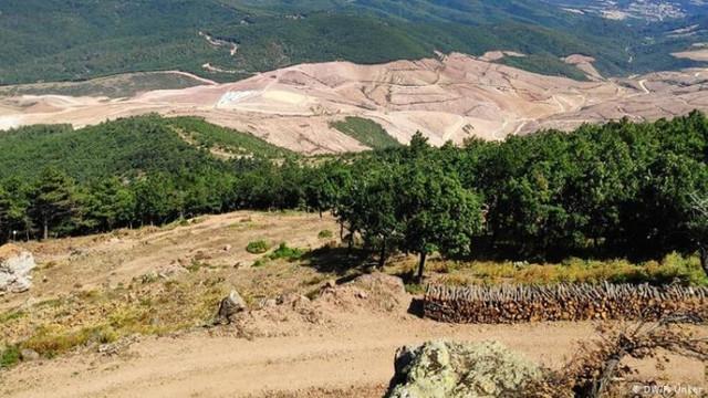 Siyanürlü altın madeni için 347 bin ağaç kesildi