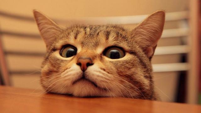 Bilim insanları: Kedi popülasyonunun bir kısmı yok edilmeli