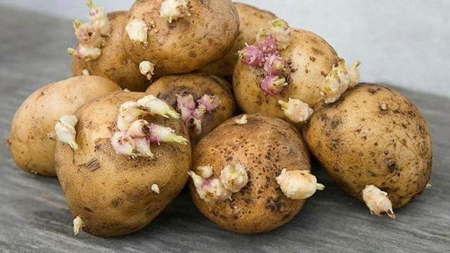 Dikkat bu patatesler öldürüyor