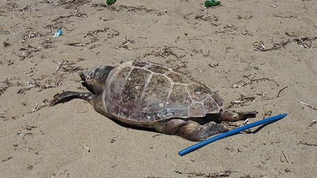 Kıyıda ölmüş halde bulundu