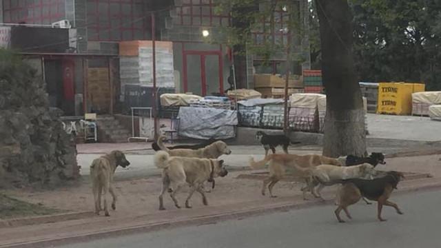Sokak köpekleri minik çocuğa kabusu yaşattı
