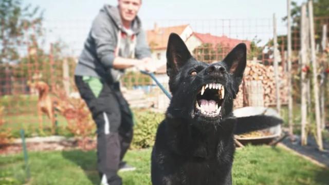 Uzmanlardan köpek sahiplerine kritik uyarı