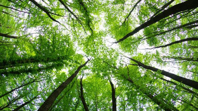 Kocaeli'nde yeşile balta ! 22 bin ağaç kesilecek