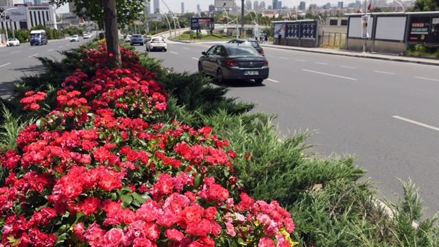 Başkent Ankara'nın dört bir yanı çiçek açtı