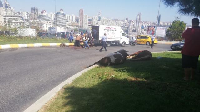 Kamyonette havasız kalan kurbanlık cadde ortasında kesildi