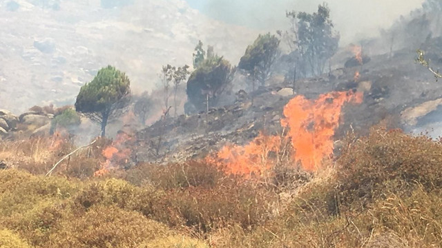 Marmara Adası'nda orman yangını !