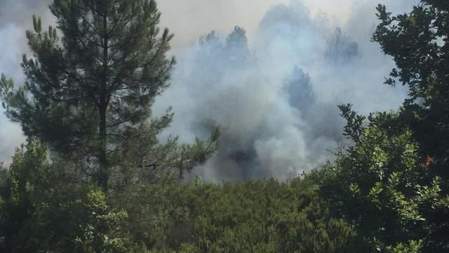 Eskişehir'de otuz hektarlık orman alanı kül oldu
