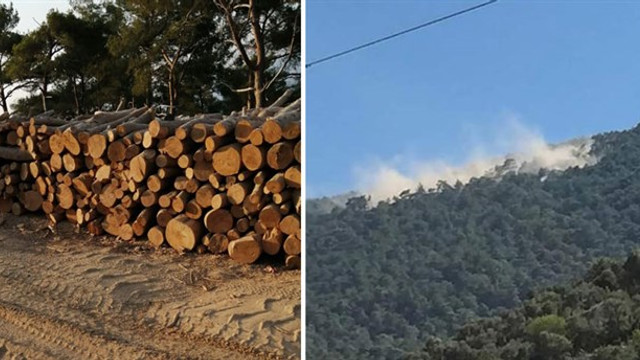 Ilbıra Dağı'nda ağaç katliamı başladı