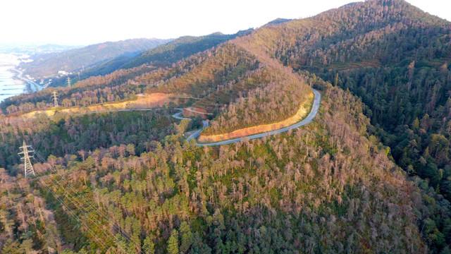 Barış Yarkadaş: ''Sarıçam Ormanları katlediliyor''