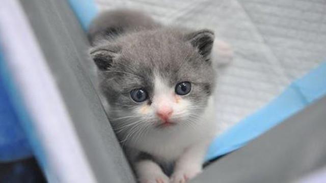 Çin'de bir ilk ! Bu kedi diğerlerinden farklı...