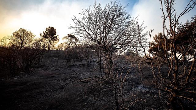 İzmir Büyükşehir Belediyesi: 5 bin hektar orman yandı